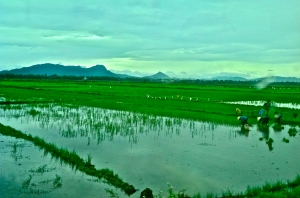 Local villagers work in a rice field. We saw many people who had a strong work ethic.
